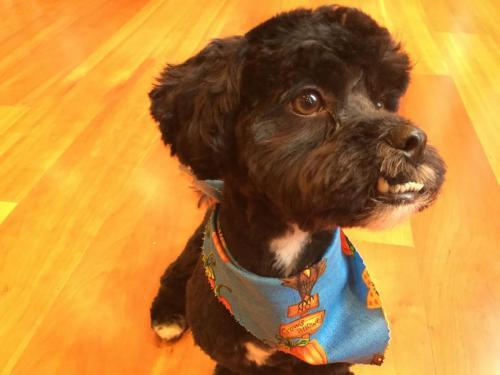 Rufus (13)
